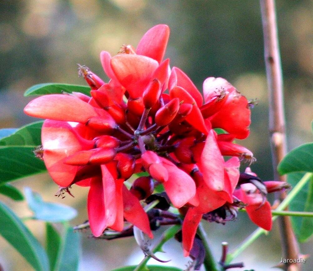 My Red Flower by Jaroadie