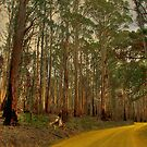 The Yellow Dirt Road by Cathleen Tarawhiti