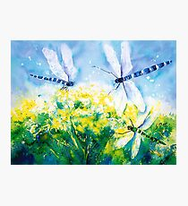 Dragonflies on the Wing Photographic Print