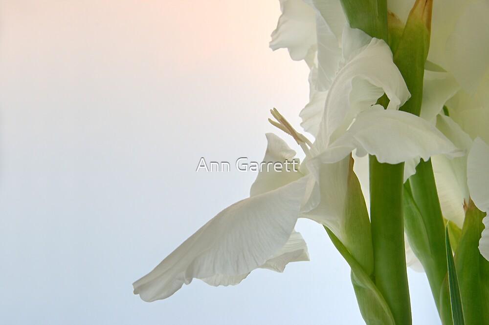Sword Lily by Ann Garrett