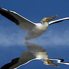 White Pelican and Reflection by TJ Baccari Photography