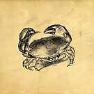 Crab Vintage Illustration by Edward Fielding