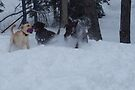 More fun in the snow by Allen Lucas