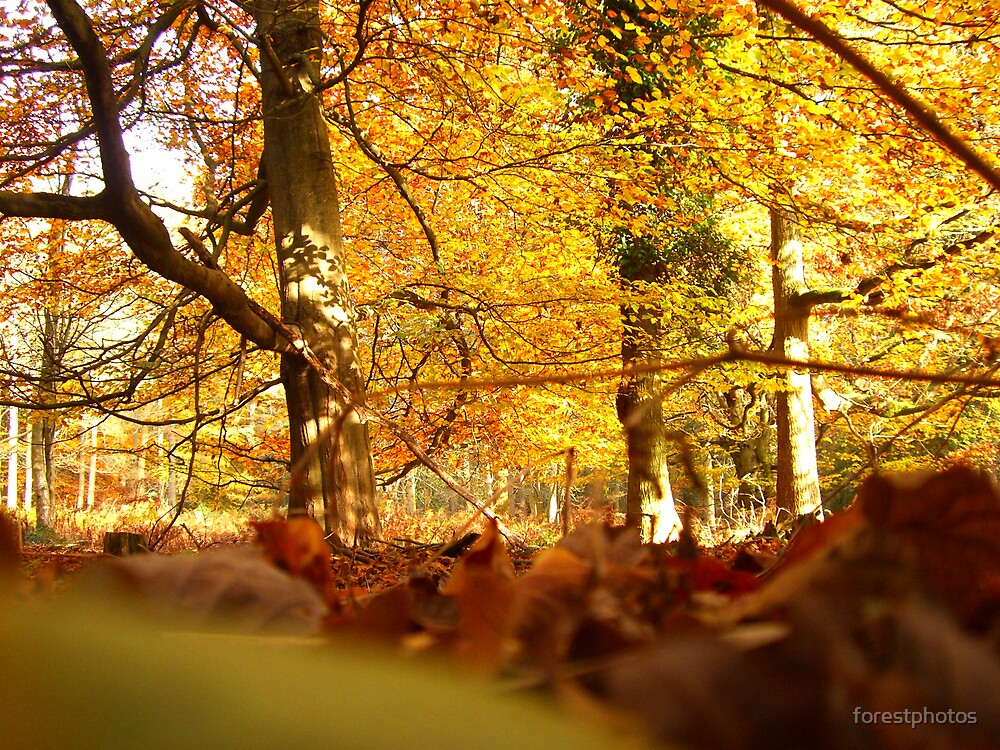 The Leafs Perspective by forestphotos
