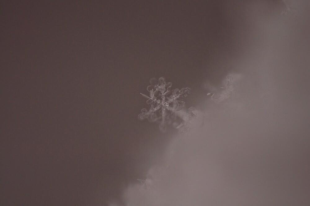 Snowflake... by Cindy Rubino