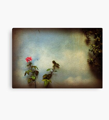 Wilting rose Canvas Print