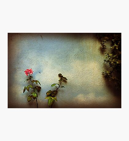 Wilting rose Photographic Print
