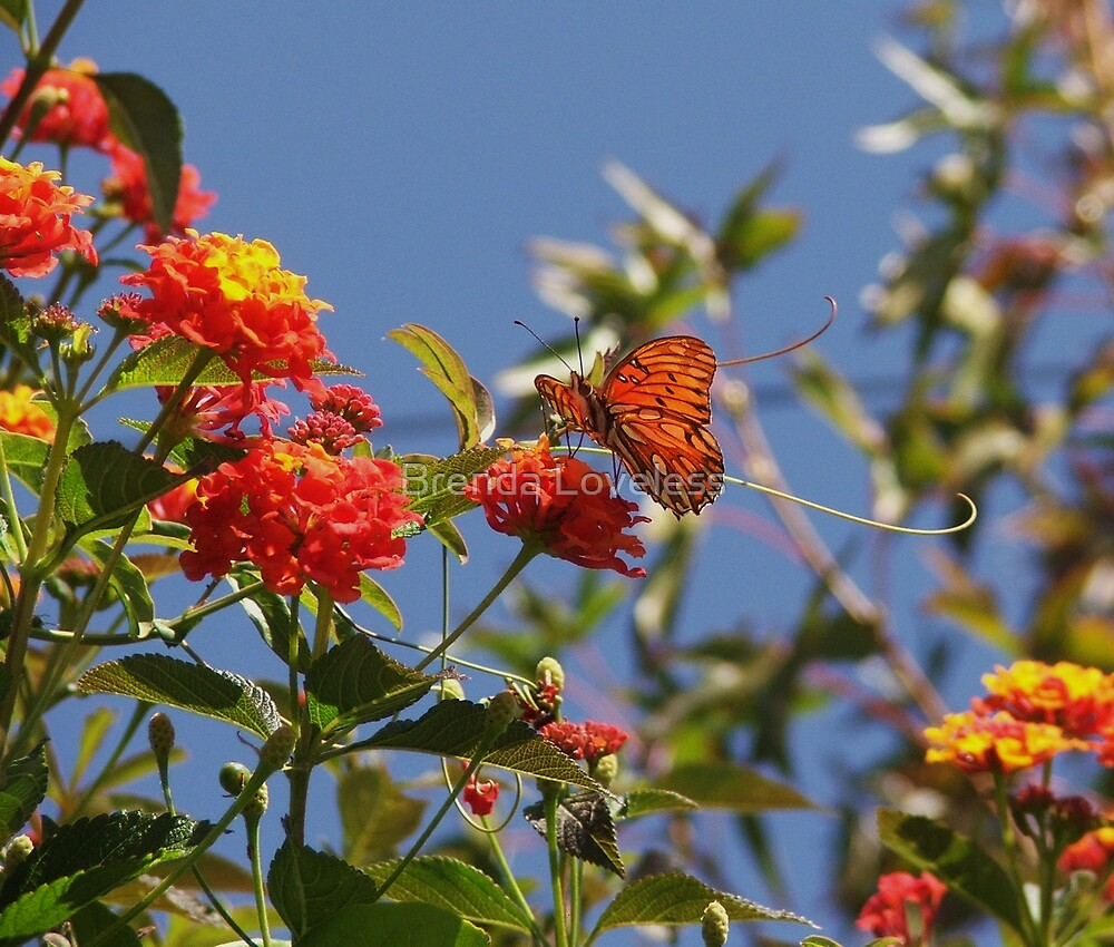 orange butterfly scene by Brenda Loveless