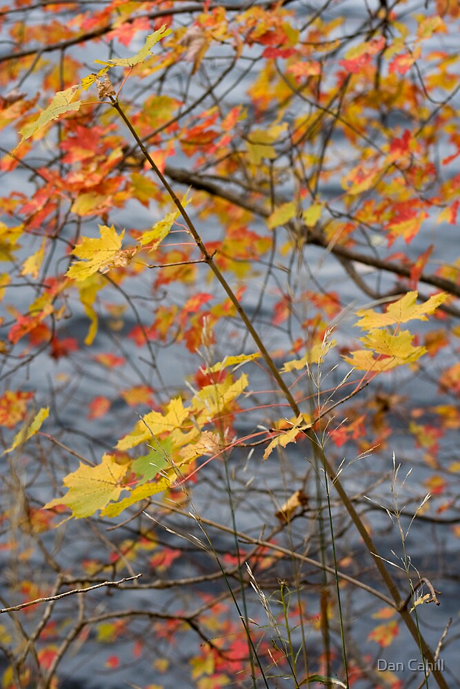 series: Autumnal Passing IV by Dan Cahill