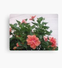 Beautiful Pink Hibiscus Canvas Print