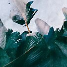 Tropical Palm Leaves by visualspectrum