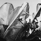 Tropical Palm Leaves in Black and White by visualspectrum