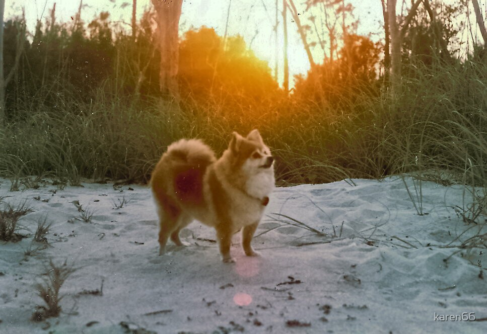 Prissy At the Beach At Sunset by karen66