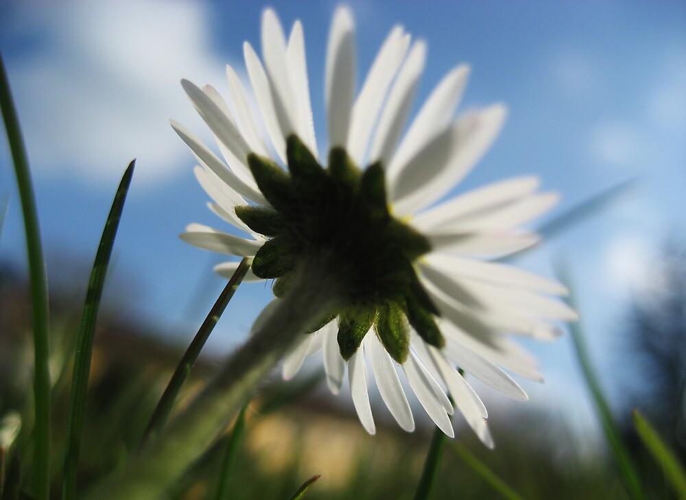 Dreamy Daisy by silverfish