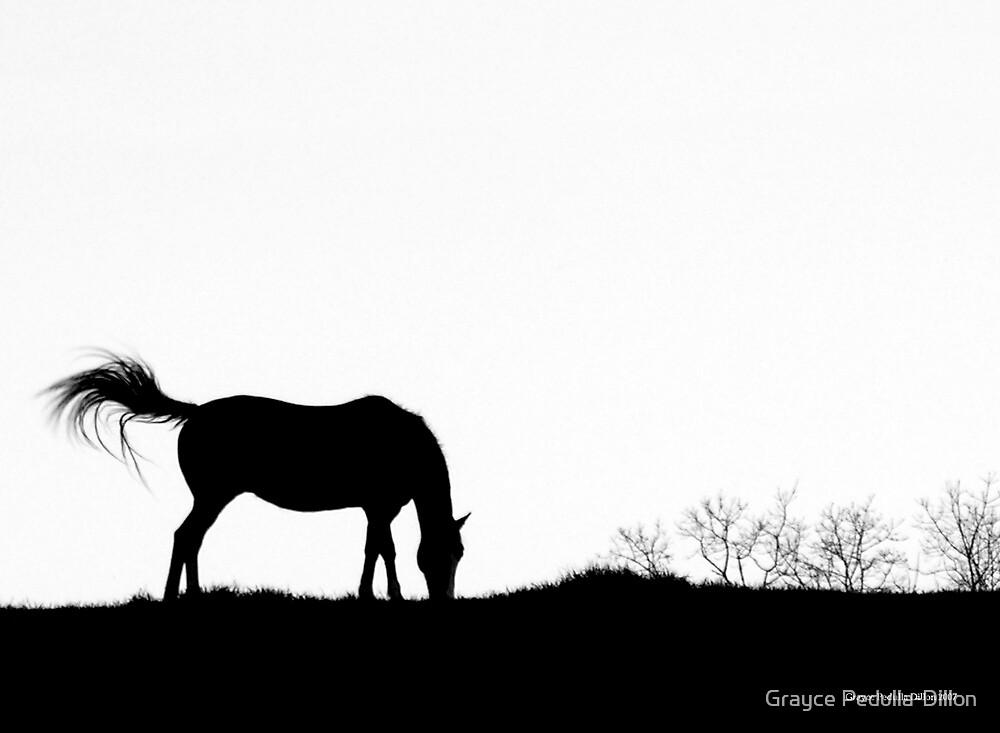 Horse Silhouette by Grayce Pedulla-Dillon