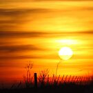 To Touch the Sun  by lorilee