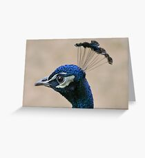 Peacock Crown Greeting Card
