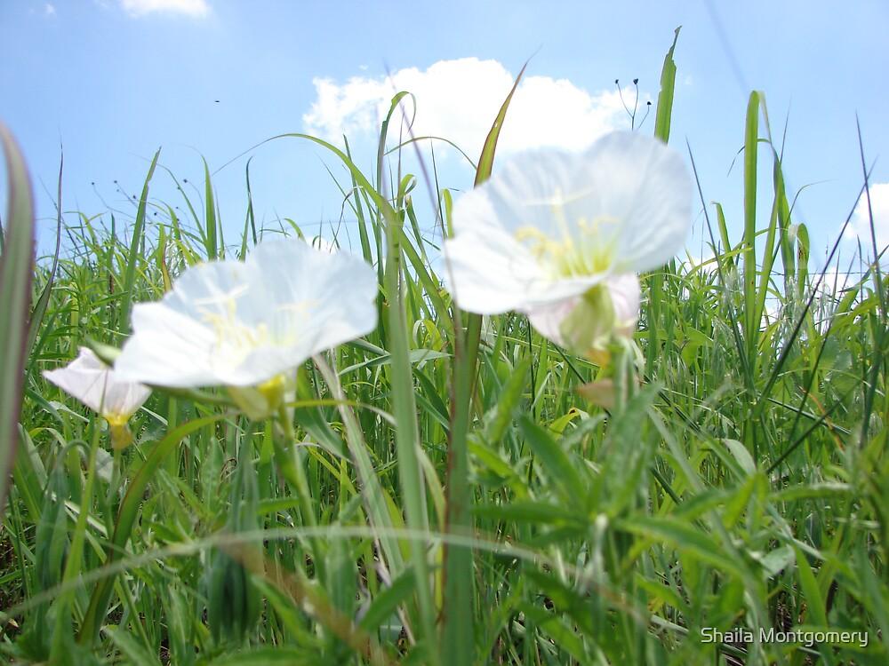 Flower Clouds by Shaila Montgomery