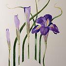 Winter-flowering Algerian Iris by Maureen Sparling
