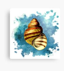 Seashell Art (1 of 3) Canvas Print