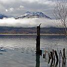 Lake Wakitipu Wildlife by Darren Newbery