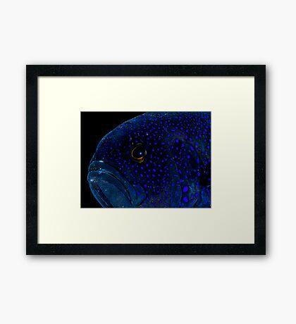 Blue Devil Framed Print