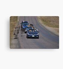 Donkey Highway Canvas Print