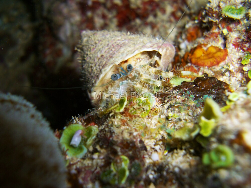 Lonely Hermit Crab by Michael Powell