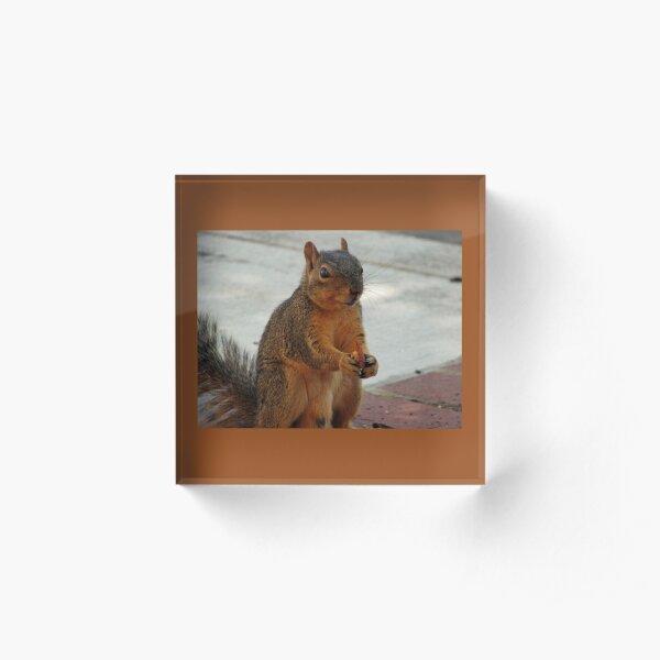 Squirrel Acrylic Block