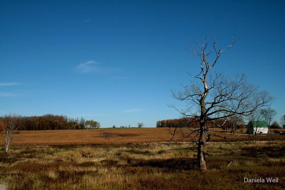 A dried-out tree by Daniela Weil