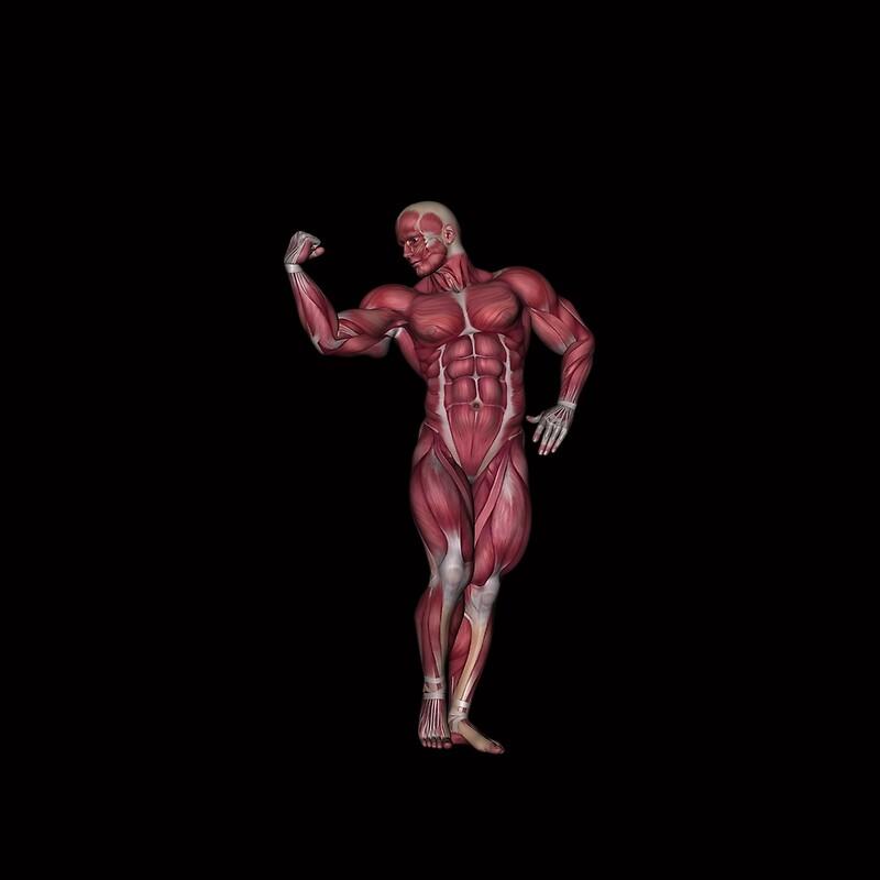 Blusas «Músculos masculinos de anatomía humana» de Solomon Barroa ...