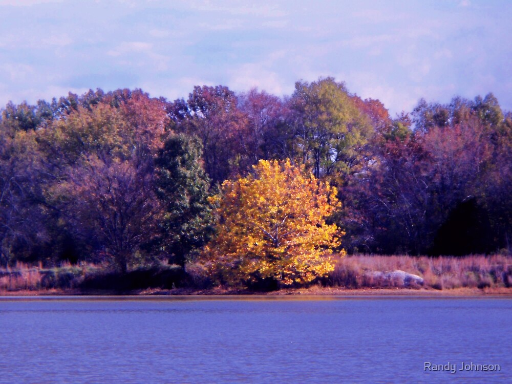 TREES IN COLOR by Randy Johnson