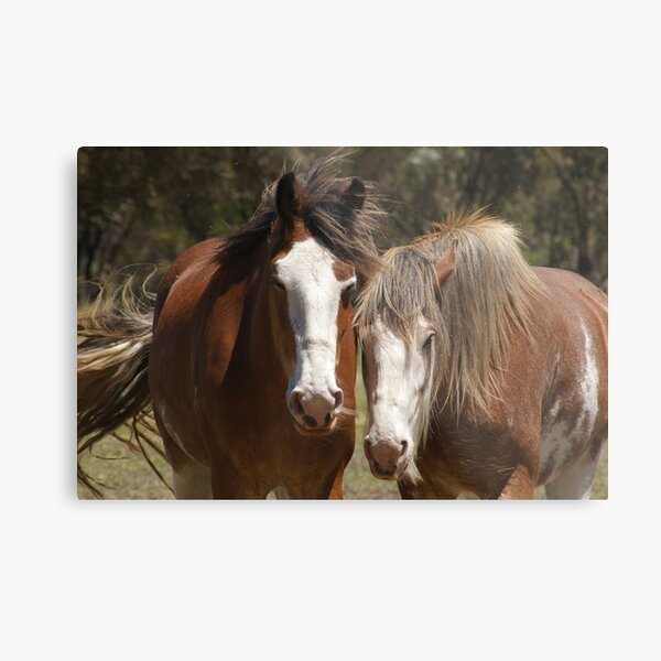 Clydes' Dale #2 Metal Print