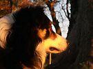 Autumn Laddie by Michael Haslam