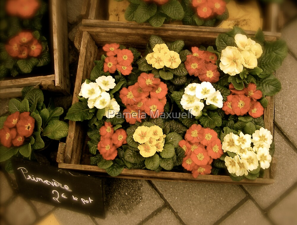Flowers for Sale by Pamela Maxwell