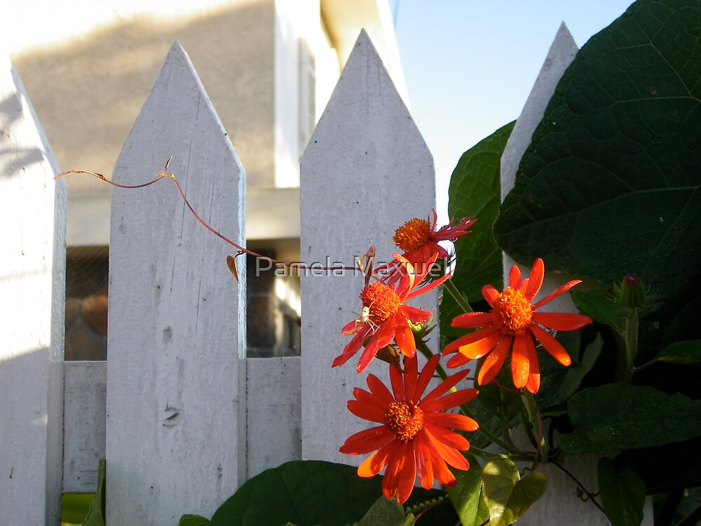 Flower by a Fence - Color by Pamela Maxwell