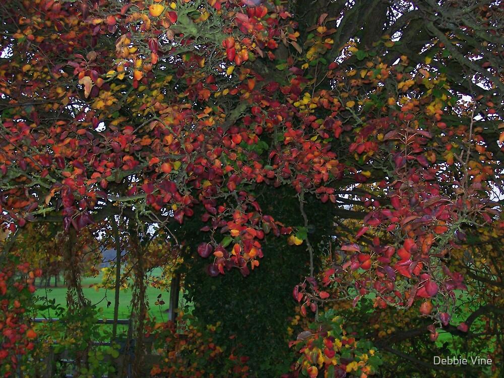 Tree of colours by Debbie Vine