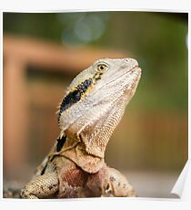 Water Dragon outside during the day. Poster