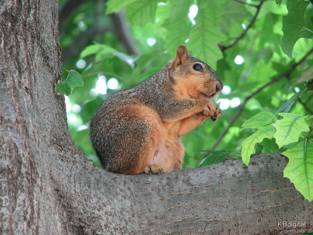 Squirrel by KBdigital