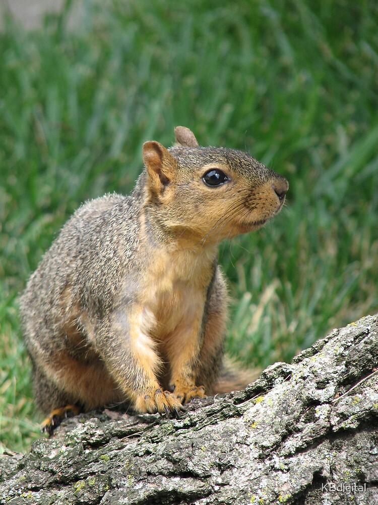 Squirrel II by KBdigital