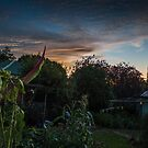 Sunset at My Place by Clare Colins