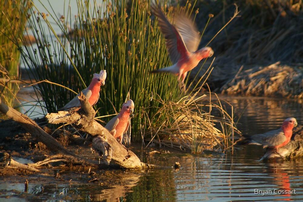 Sunny birds by Bryan Cossart