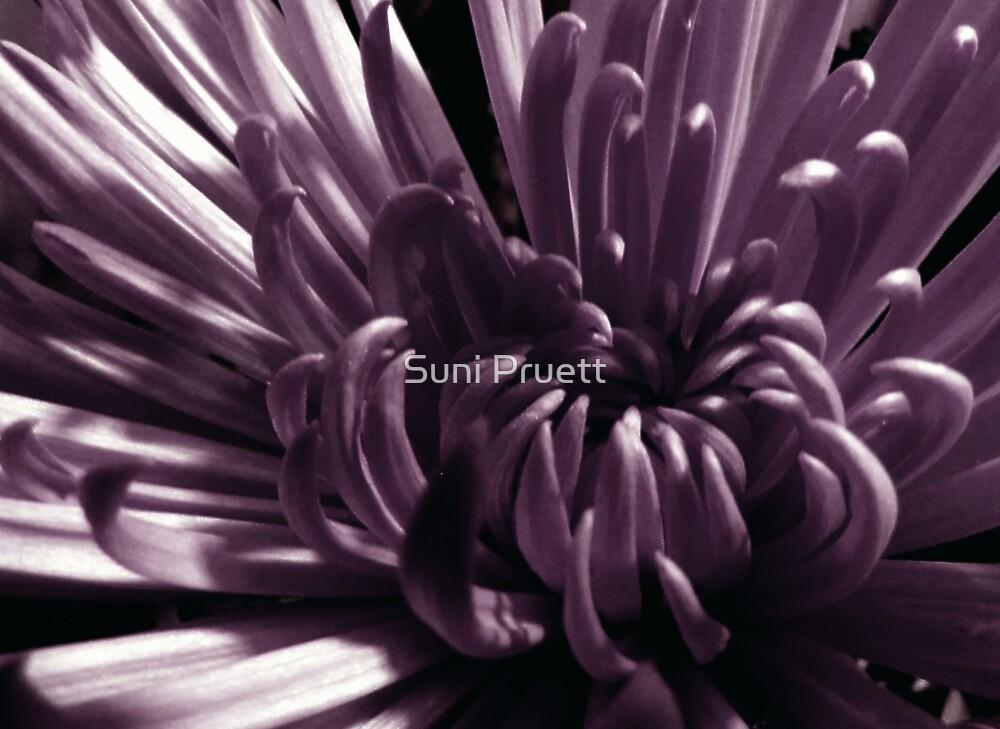 Unfold by Suni Pruett