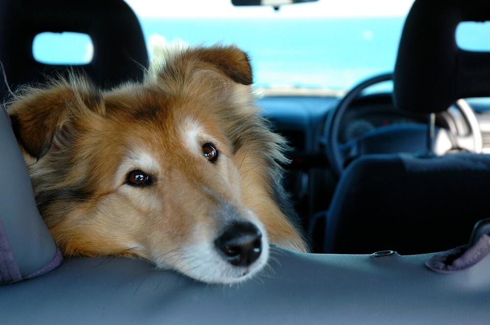 Back seat driver by Roslyn Slater
