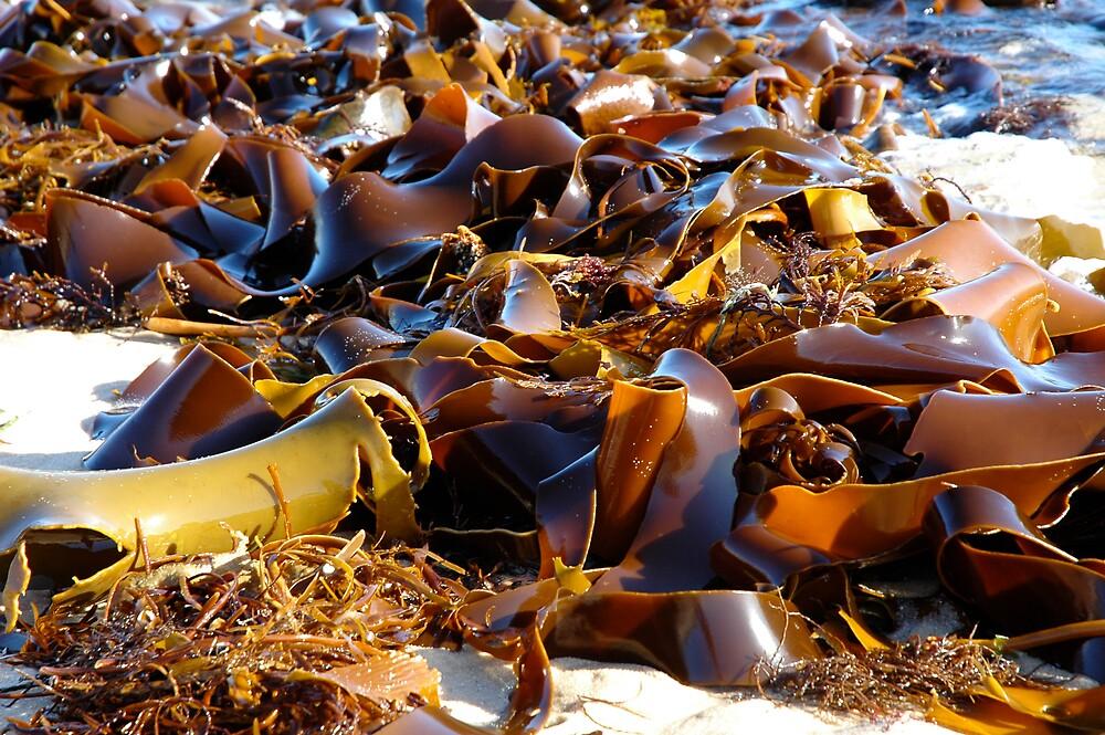 Kelp by Roslyn Slater