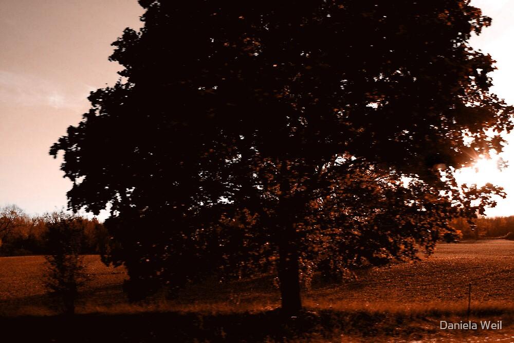 My friend the tree! by Daniela Weil