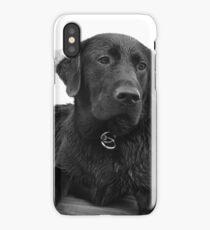 Black Lab iPhone Case/Skin