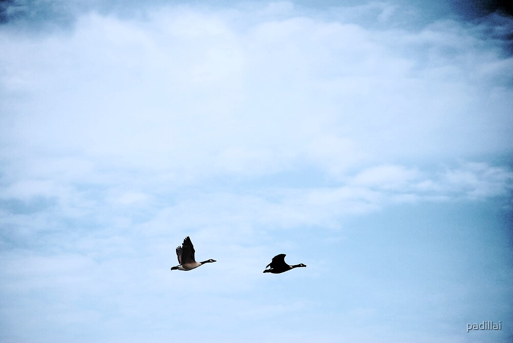 Flying Geese II by padillai