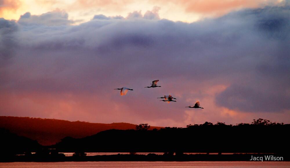 Spoonbill in flight. by Jacq Wilson