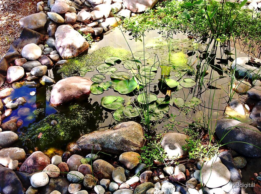 A Frog's Haven by KBdigital